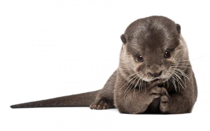 otter cute