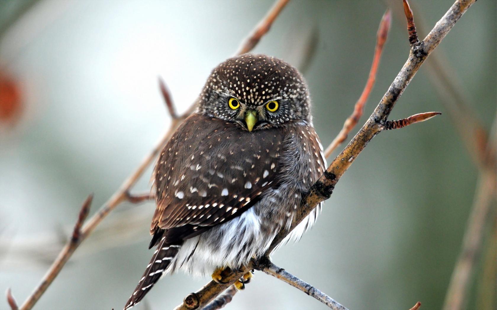 owl beautiful wallpaper
