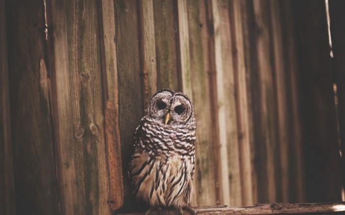 owl bird photo