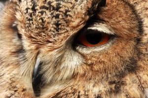 owl curious