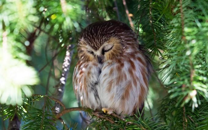 owl day sleep
