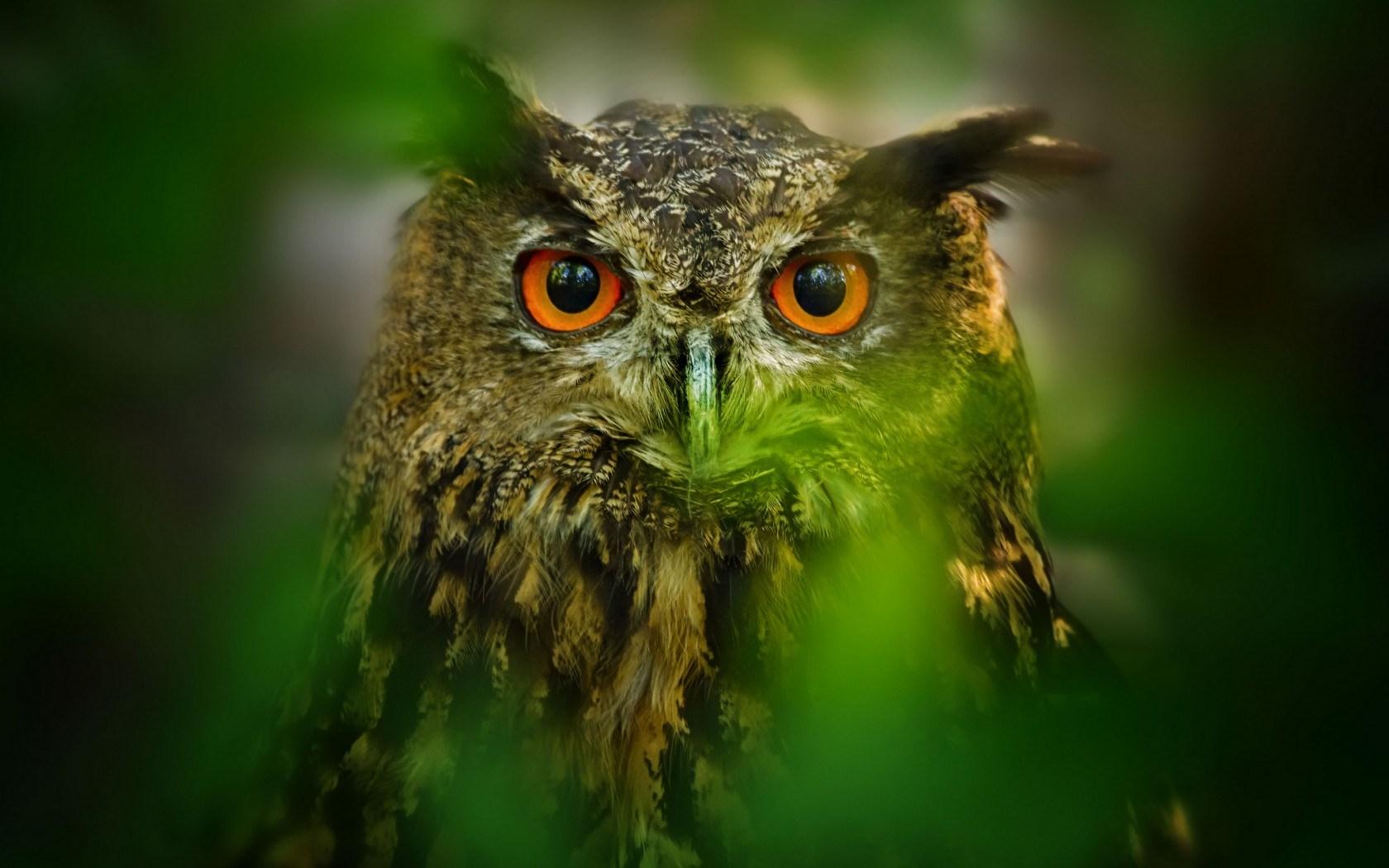 owl eyes brown wallpaper
