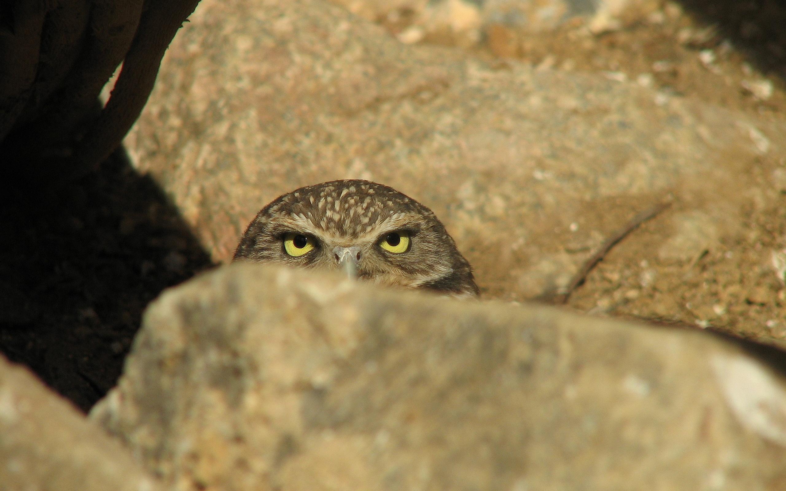 owl eyes scary