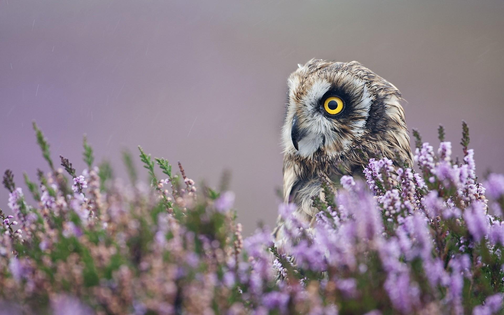 owl flowers