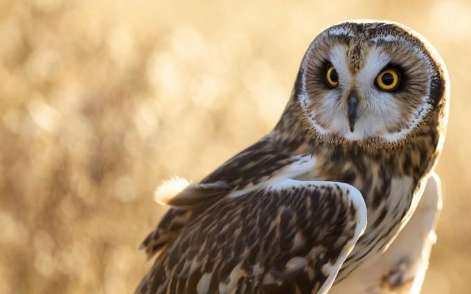 owl hunt mode