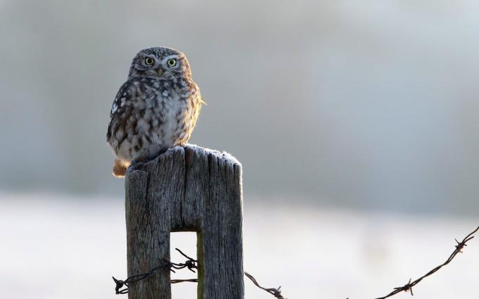 owl sweet