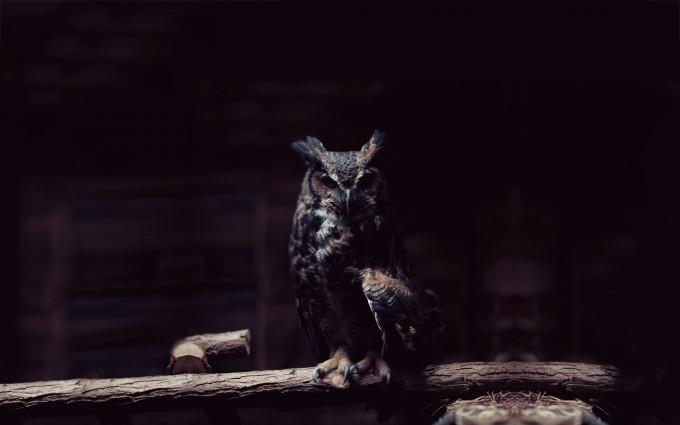 owl wallpaper dark