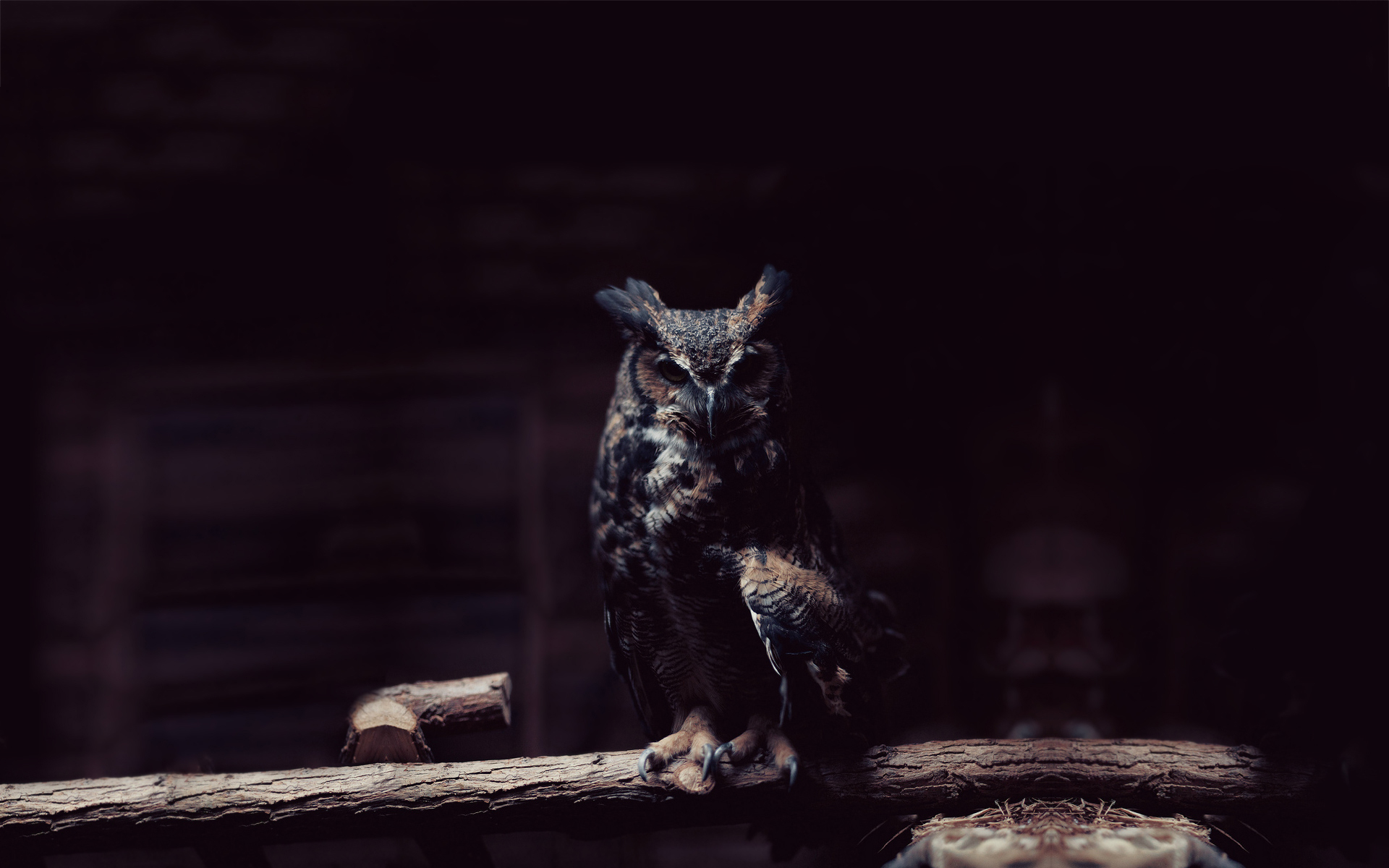 owl wallpaper dark