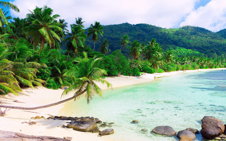 Shore Palms Tropical Beach 4k Hd Desktop Wallpaper For 4k: Palm Beach Sand - HD Desktop Wallpapers