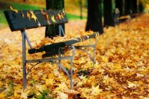 park bench autumn