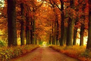 park valley autumn