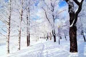 park wallpaper winter