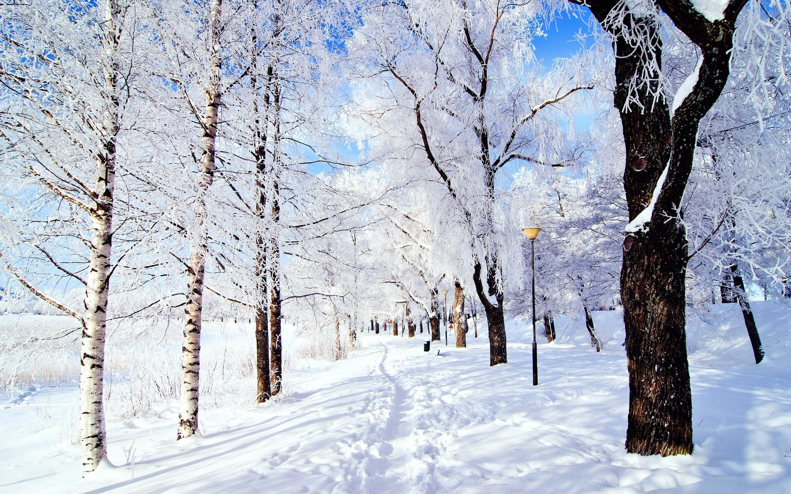 park wallpaper winter
