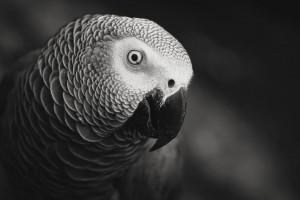 parrot cute