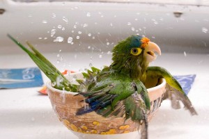 parrot cute pc download