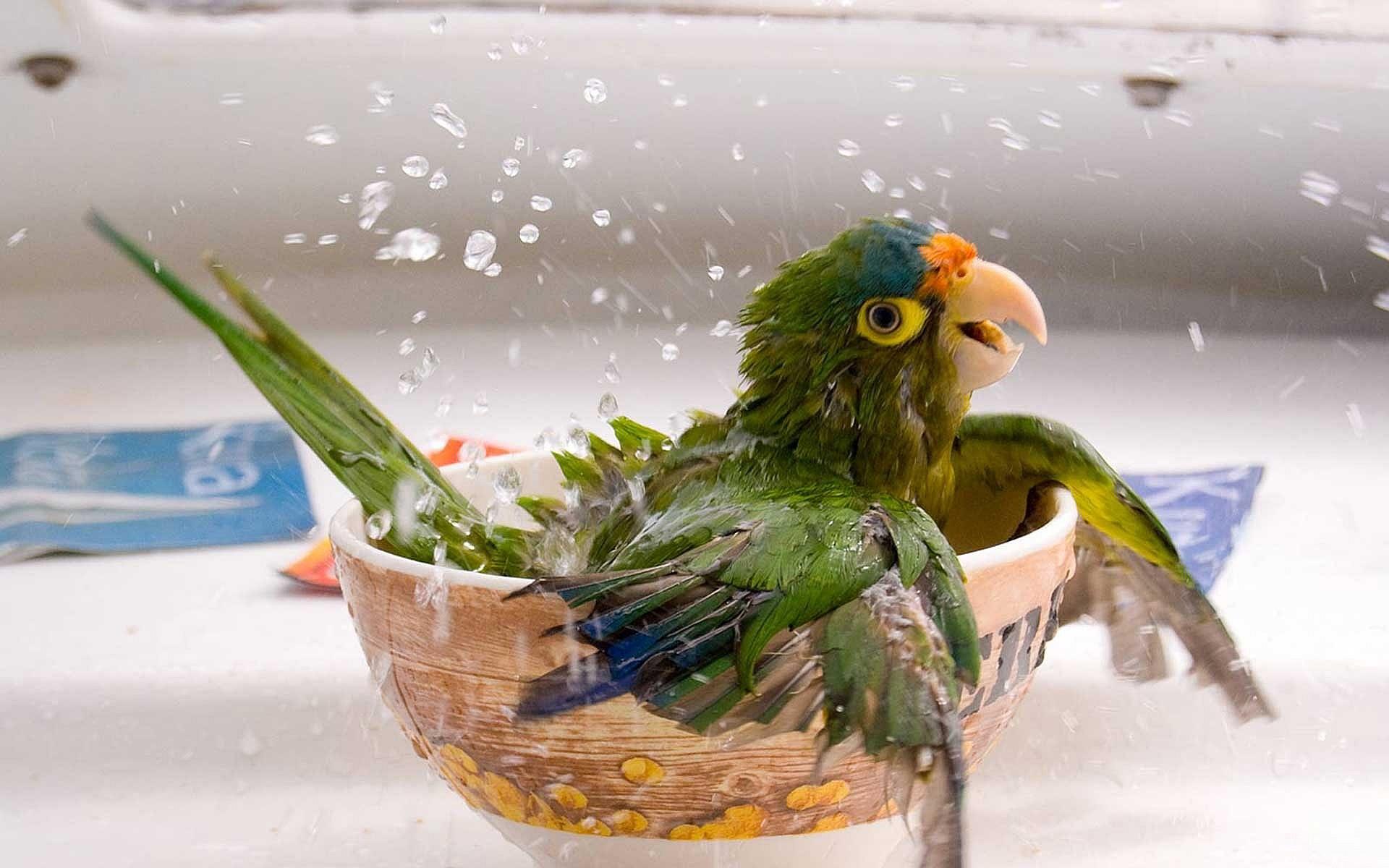 parrot cute pc download