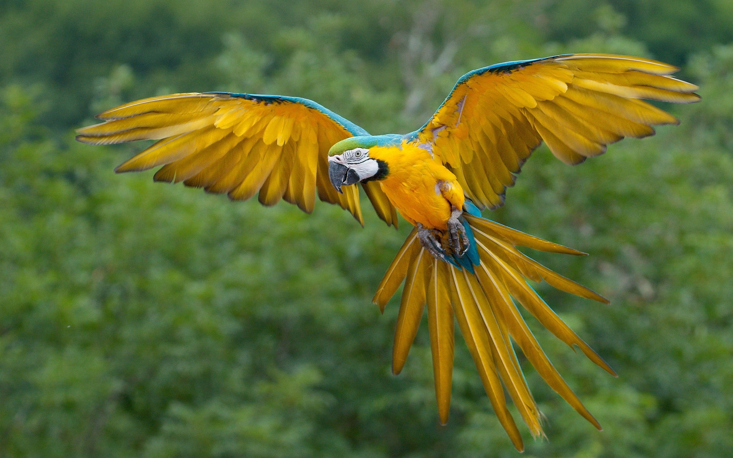 parrot macaw flying