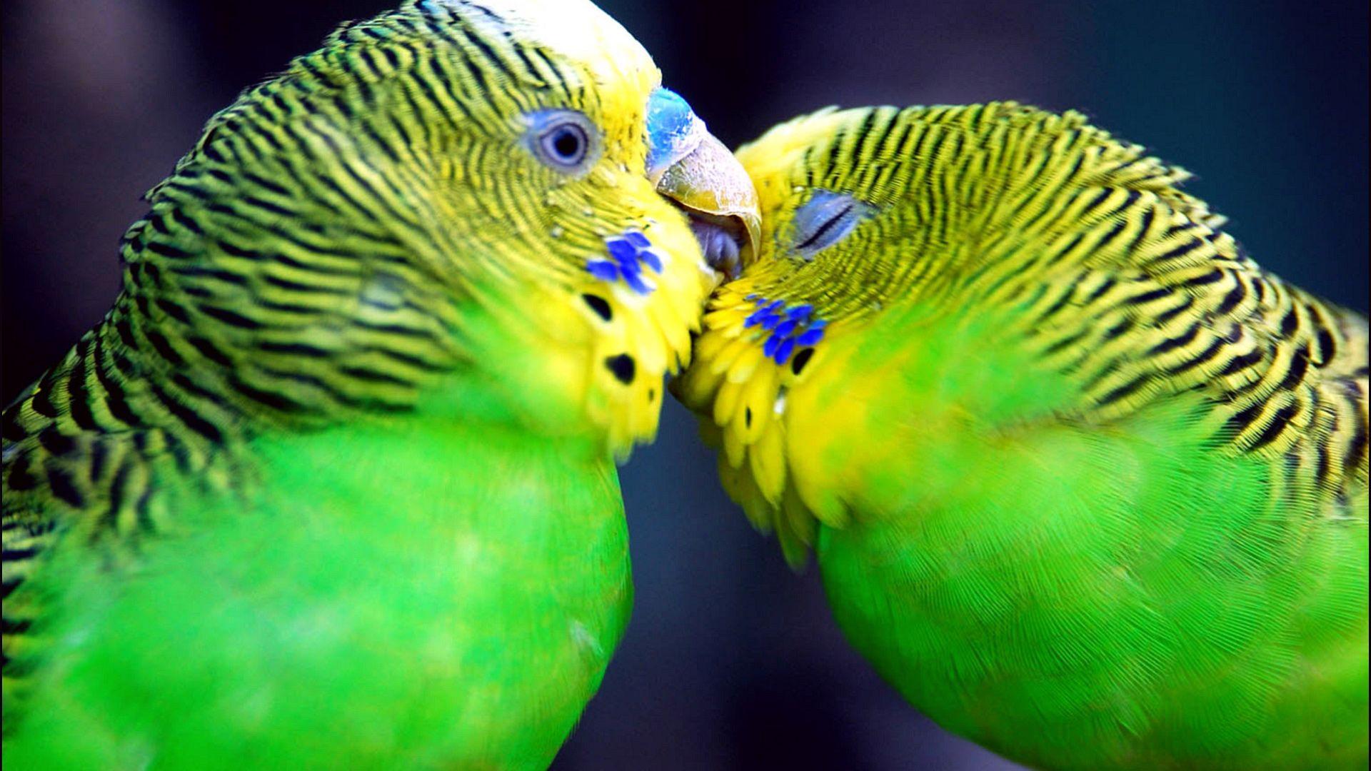 parrots love