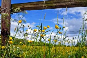 pasture fence flowers