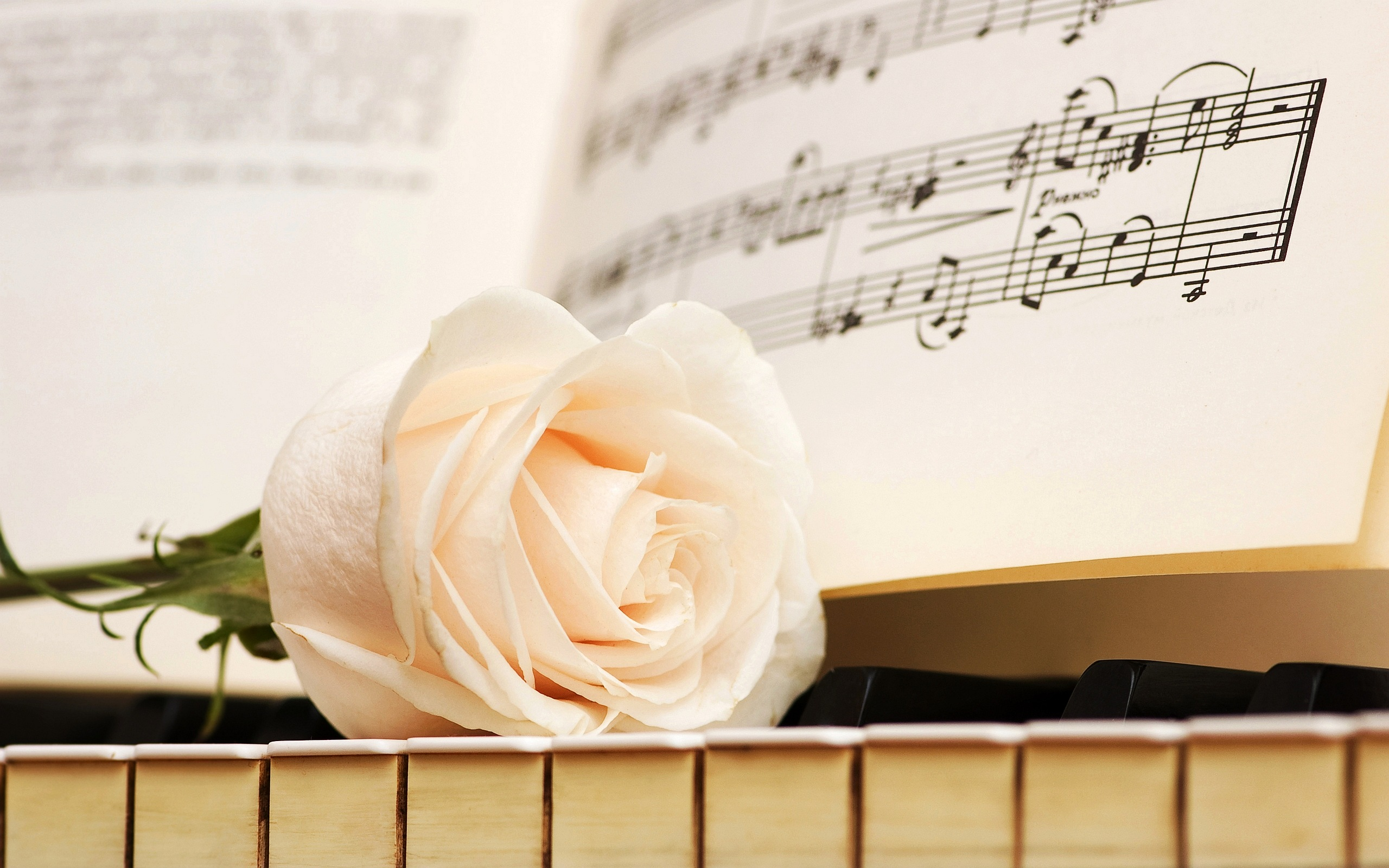 piano rose wallpaper