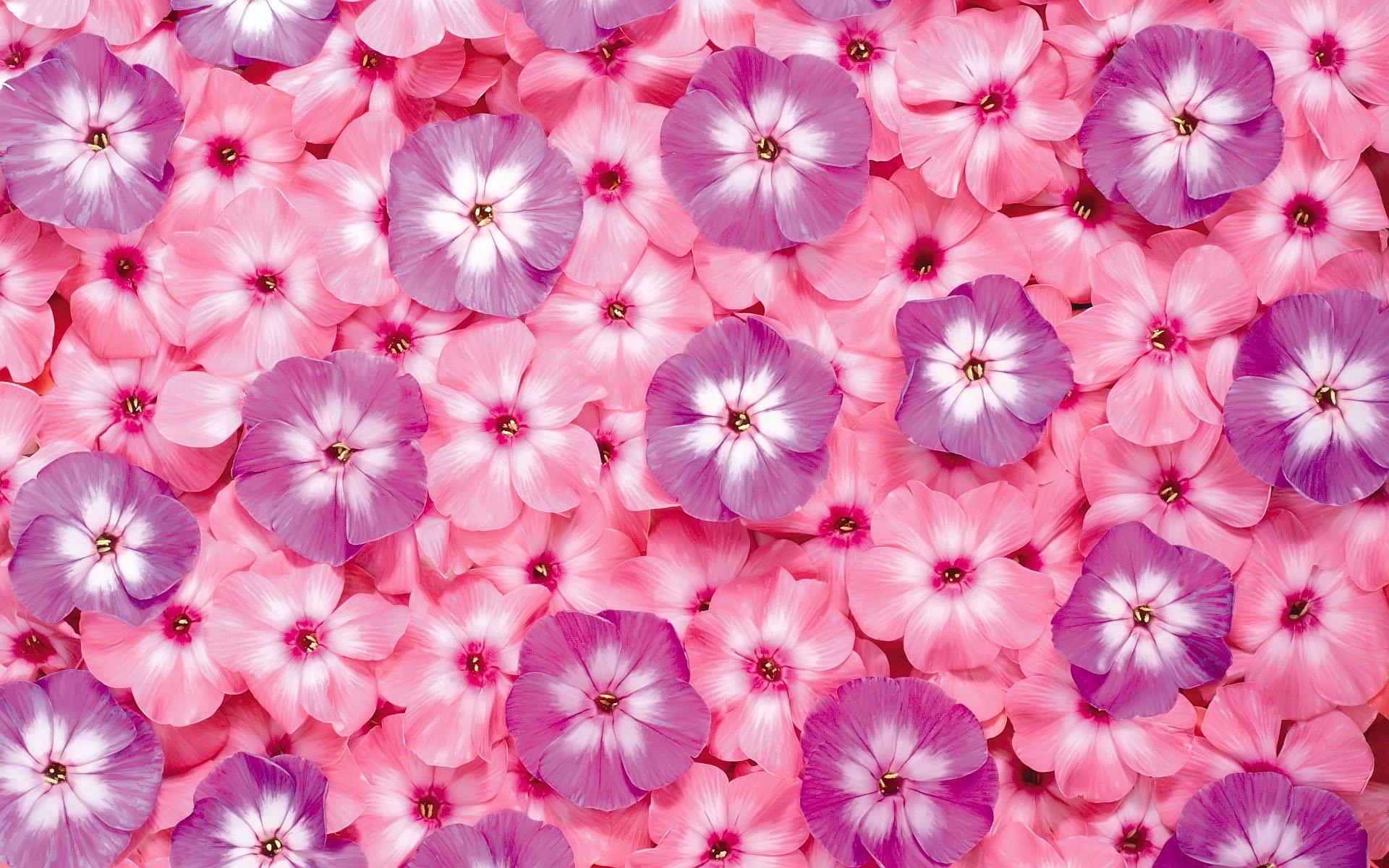 pink desktop images