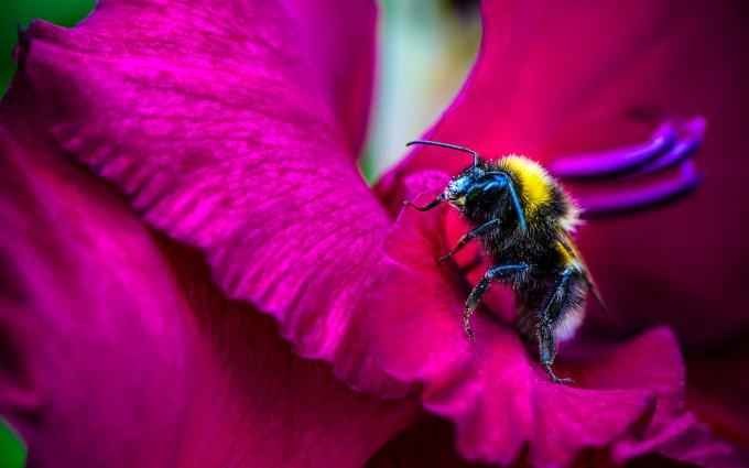 pink flower honey bee