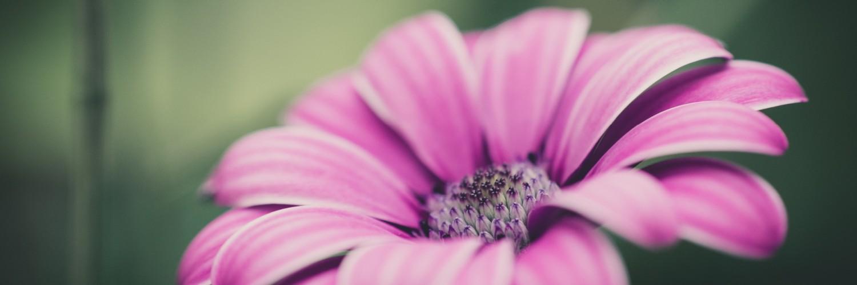 Pink Flower Nice - HD Desktop Wallpapers