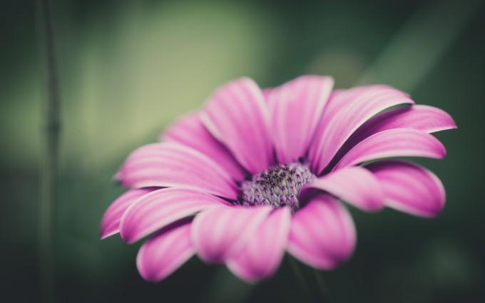 pink flower nice