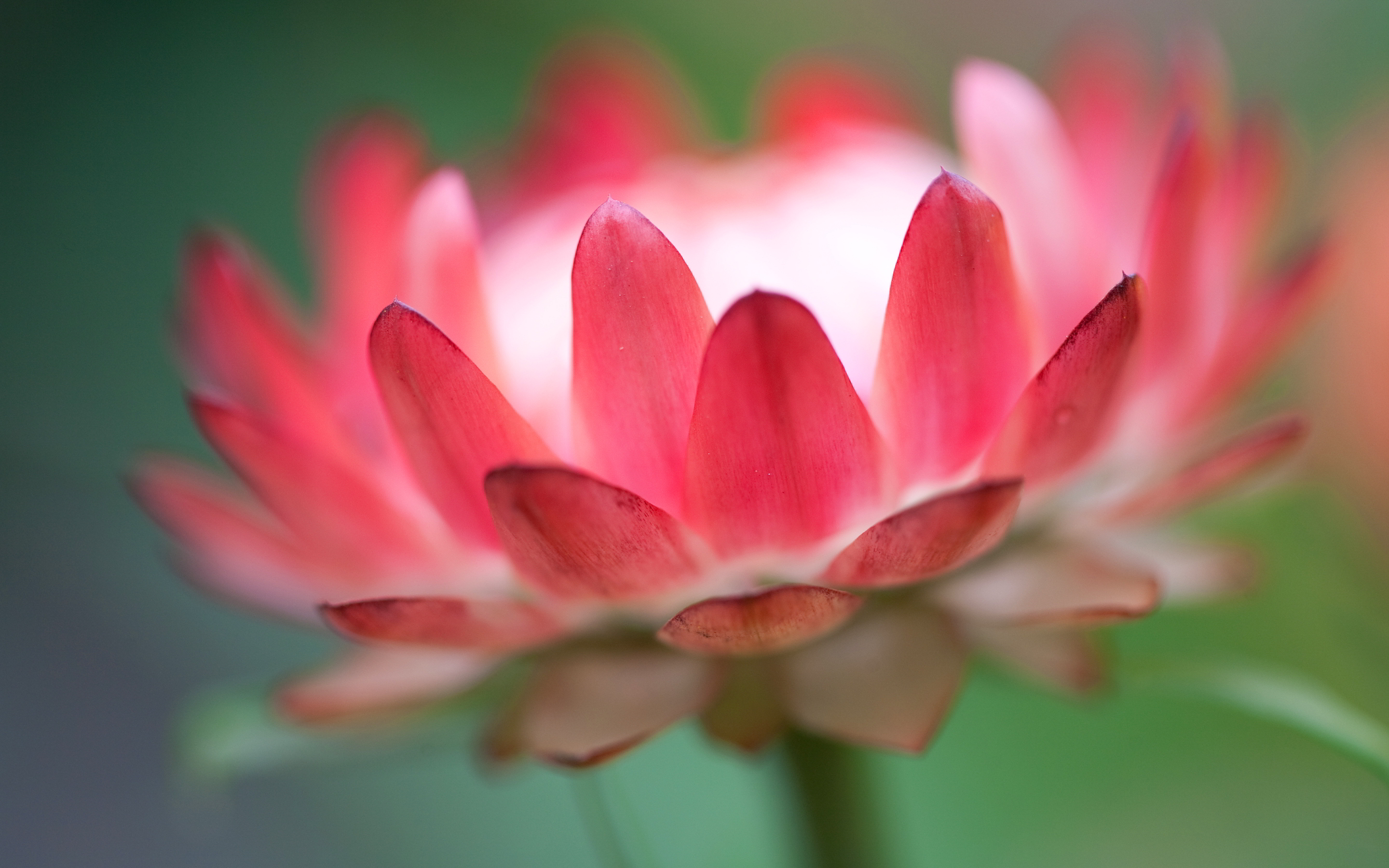 Pink Flower Nice - HD Desktop Wallpapers