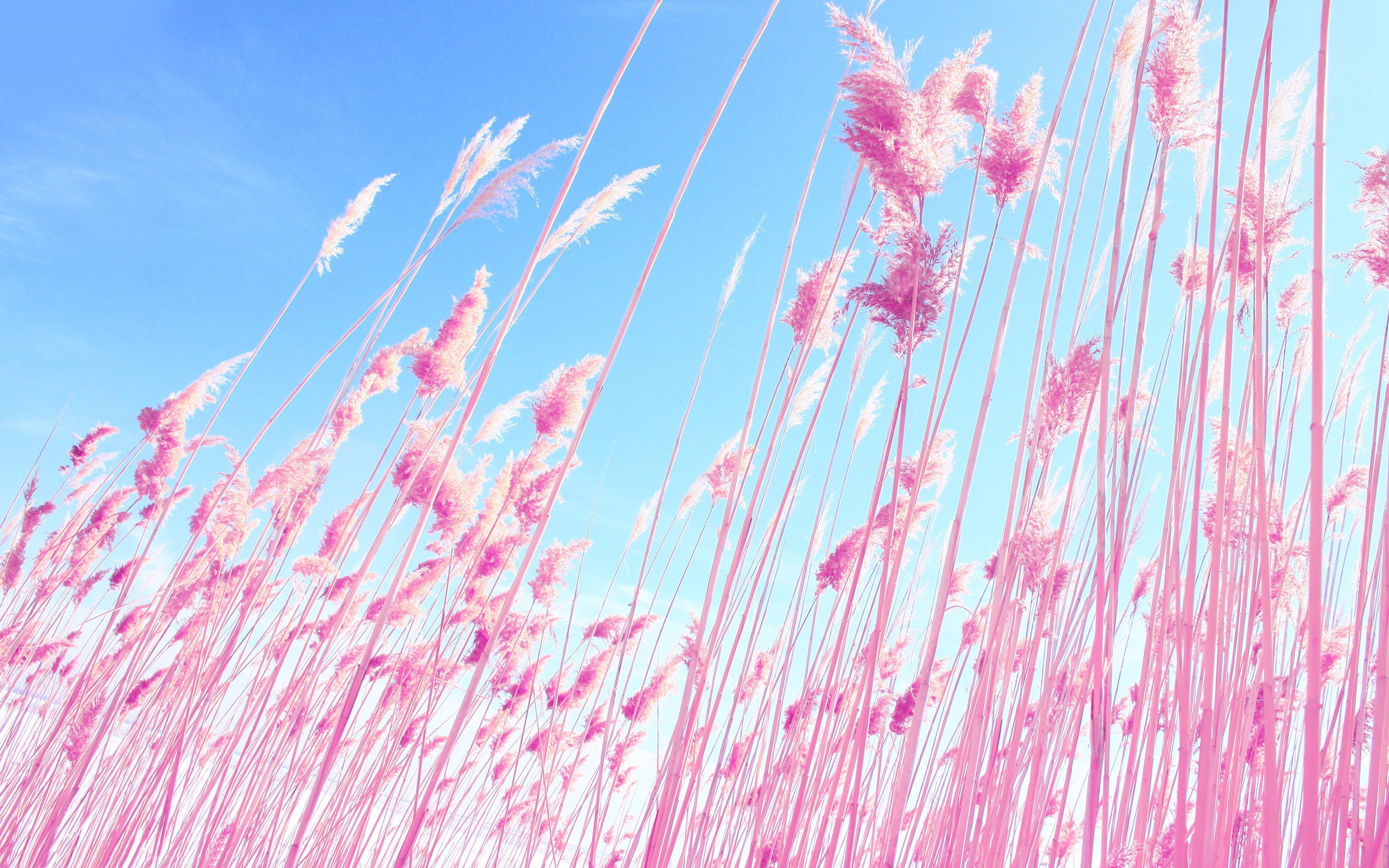 pink reed images