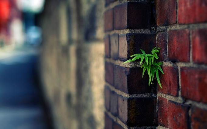 plant wallpaper urban brick