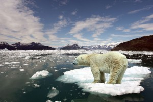 polar bear antartica