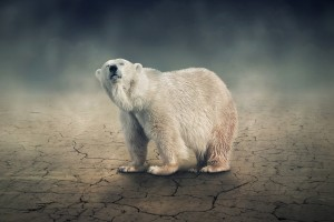 polar bear wild animal