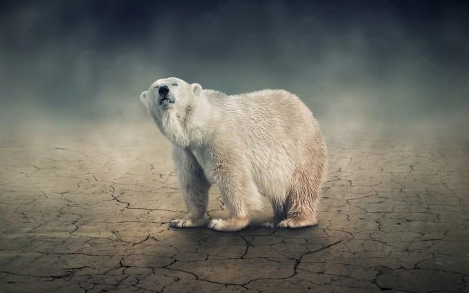 polar bear wild animal