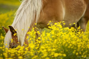 pony wildlife wallpaper