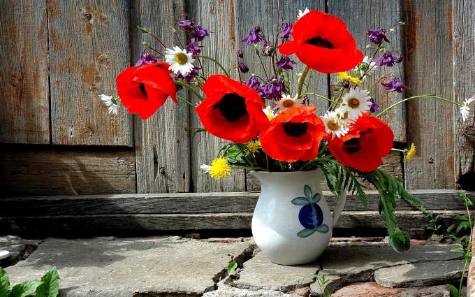 poppies beautiful