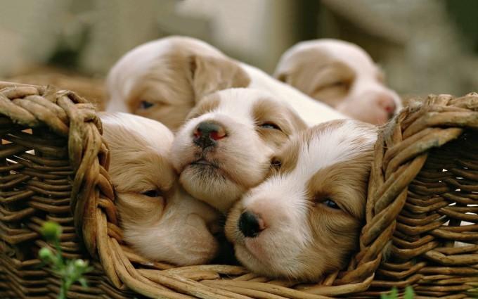 puppies cute adorable