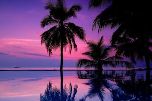 purple sunset wallpaper tropical
