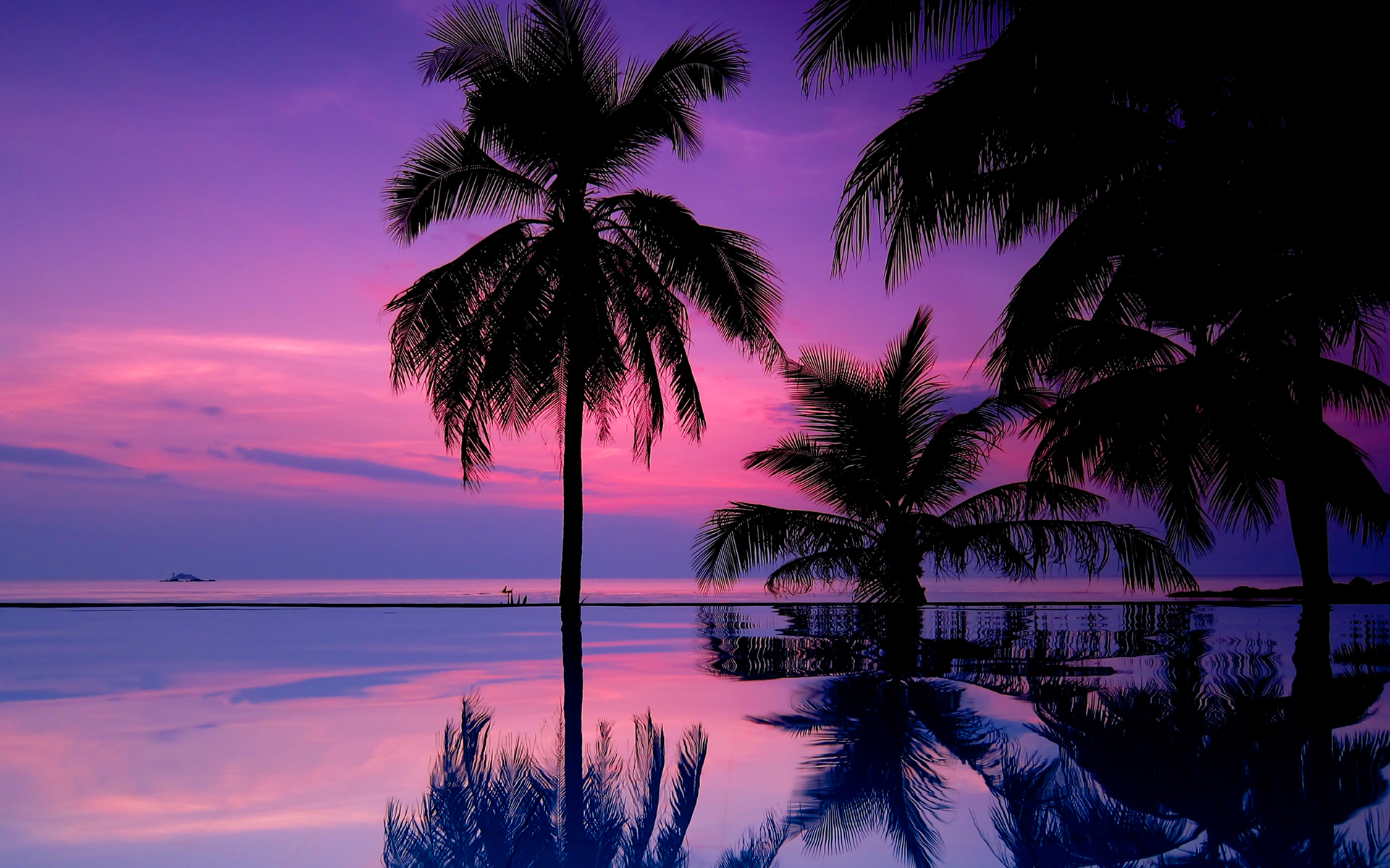 purple sunset wallpaper tropical
