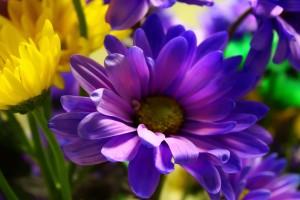 purple yellow flower plants