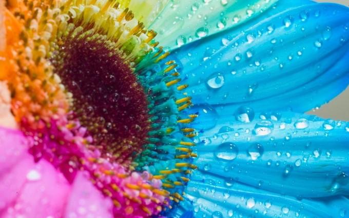 raindrops free images