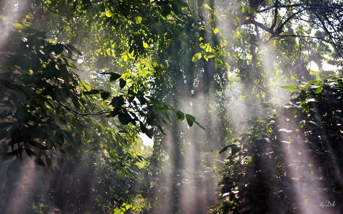 rainforest foggy wallpaper
