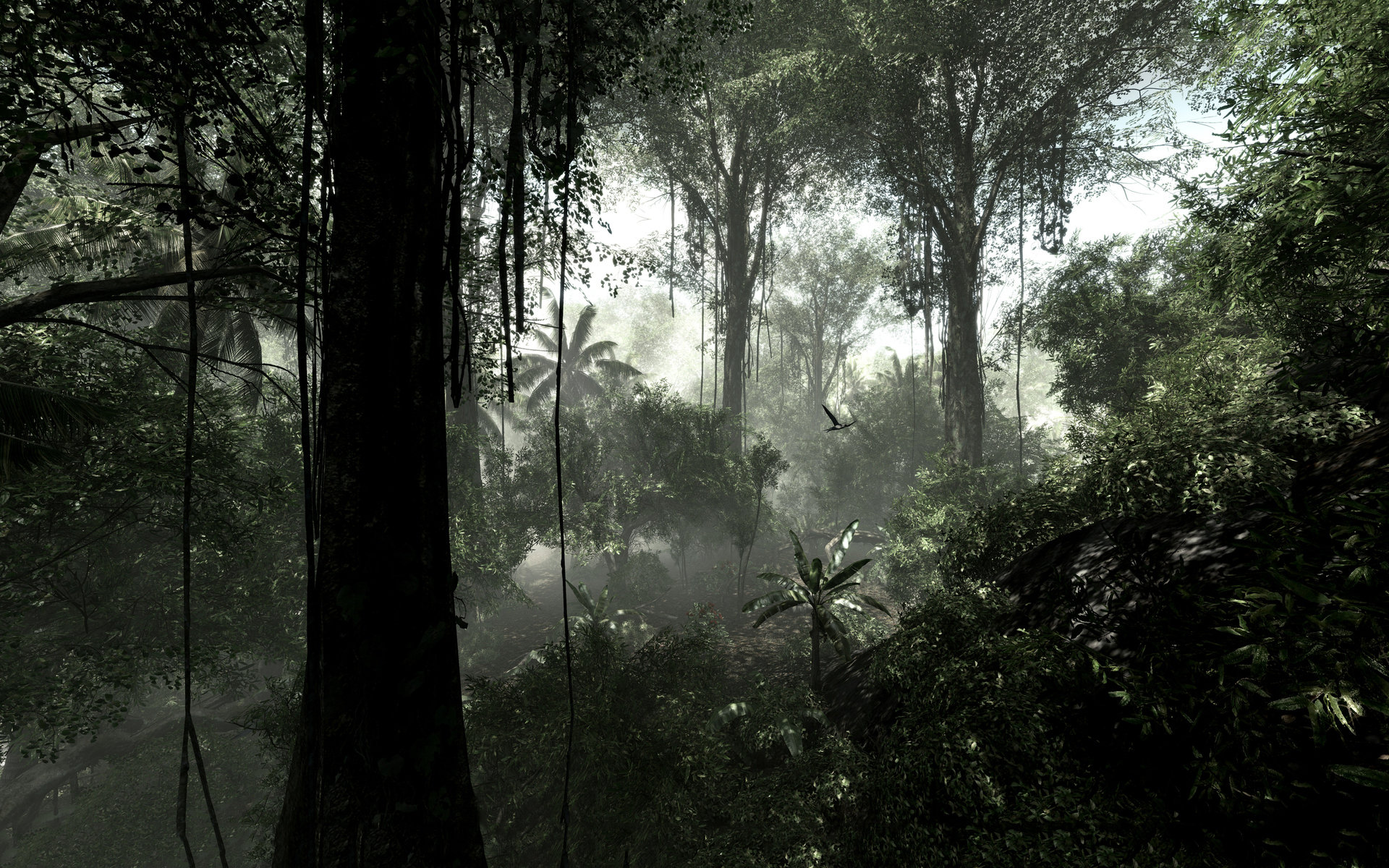 rainforest free jungle download