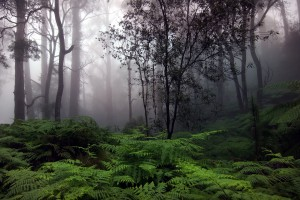 rainforest free pictures