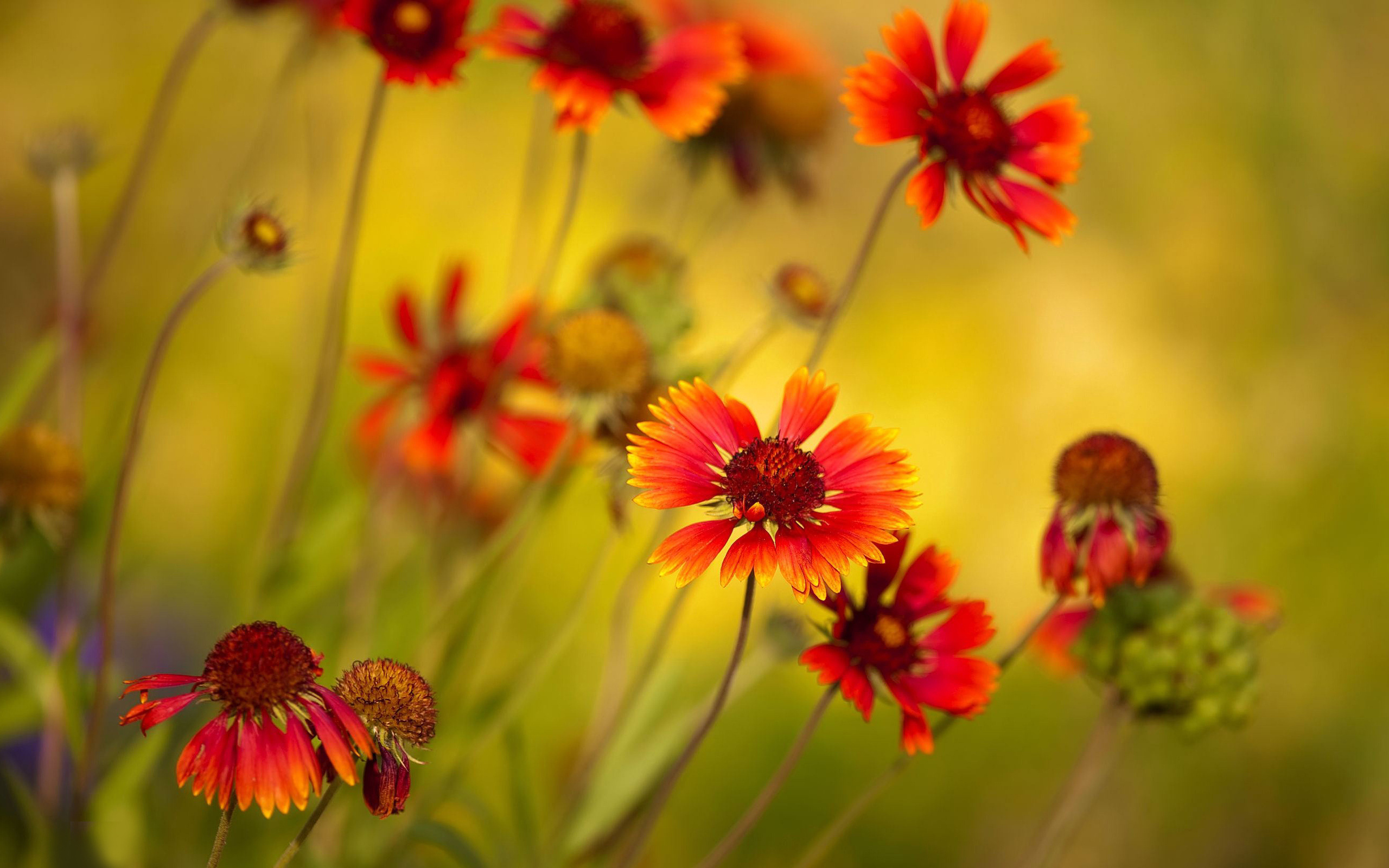 red flowers hd download