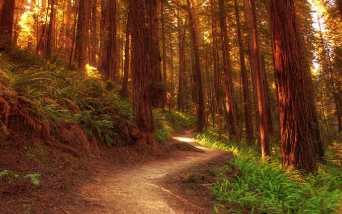 redwood images