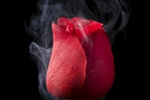 rose smoking