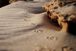 sand tracks wallpaper