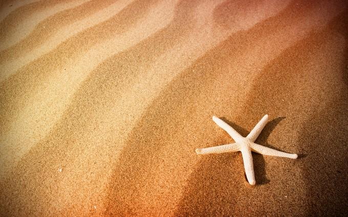 sand wallpaper starfish