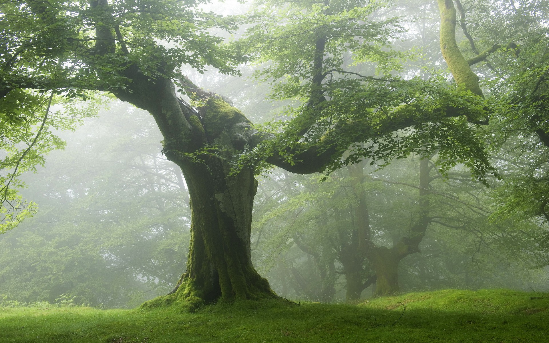 scenery enchanted tree nature
